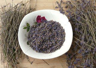 huis-tuin-en-keuken: Lavendel oogsten en drogen | vooral voor volgend jaar. nu zijn de lavendelbloemetjes al ver ingedroogd aan de bos