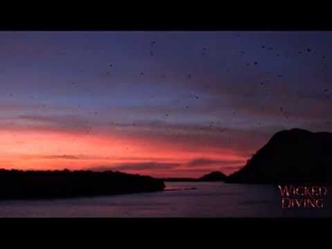 Komodo Liveaboard - Bats going to dinner. http://wickeddiving.com/wd-liveaboards/komodo-liveaboard/