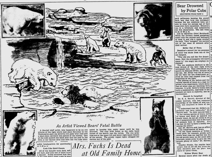 In October, 1932, in Milwaukee's Washington Park Zoo, two young polar bears drowned a black bear in a pool, over the course of a half an hour. Hundreds of
