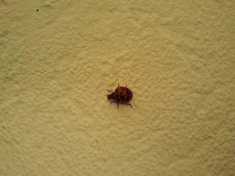 Wetenschap 24 - Lieveheersbeestjes in huis? Stuur ons de foto's!