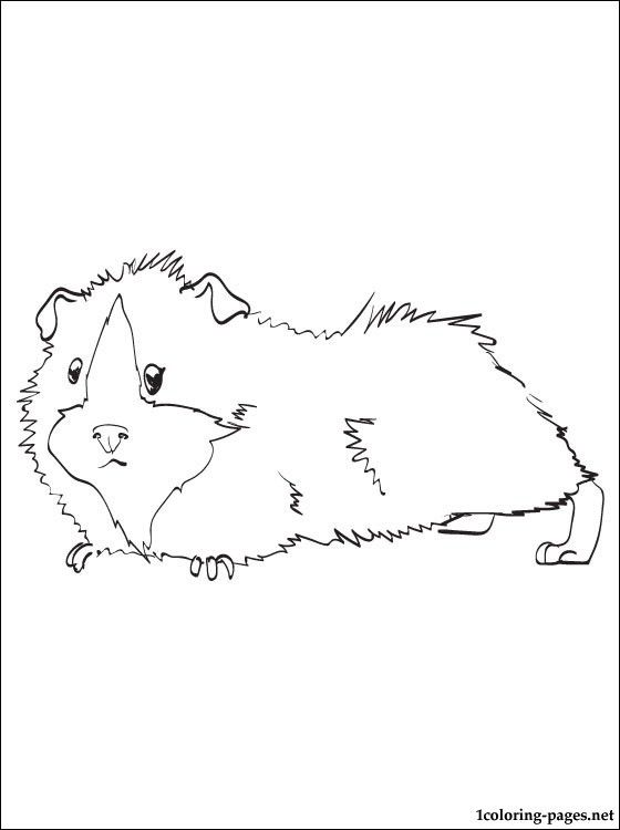 Guinea Pig Printable And Coloring Page