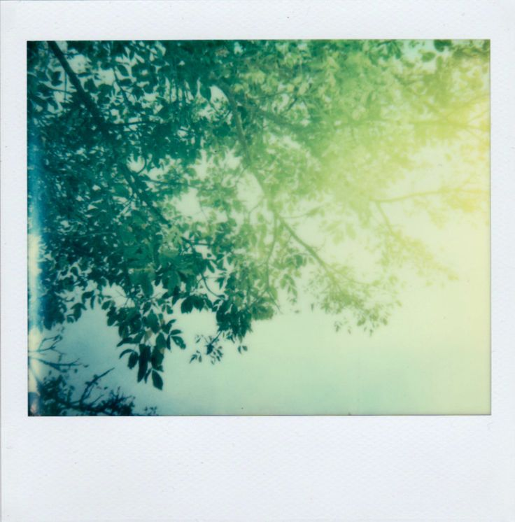 #tree #sun #polaroid
