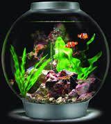 AQUARIUM SUPPLIES, ACCESSORIES AND EQUIPMENT: Biorb Aquarium