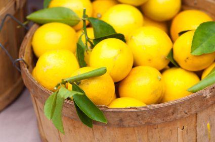 Aunque estos consejos se pueden extrapolar a cualquier variedad de limón nos hemos centrado en la Meyer por ser de las más usadas para el cultivo del limón en maceta. Las cosechas de limones de est…