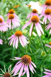 Shade Garden Design Perennials Backyards
