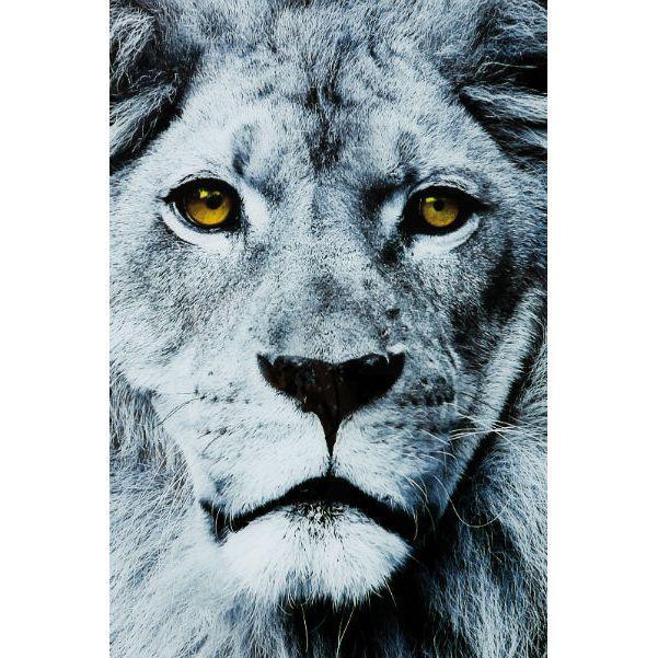 Πίνακας Glass Face Lion 80x80 Εντυπωσιακός πίνακας που απεικονίζει το επιβλητικό πρόσωπο ενός λιονταριού με κεχριμπαρένια μάτια σε γκρίζες αποχρώσεις. Ψηφιακή εκτύπωση πάνω σε γυαλί.