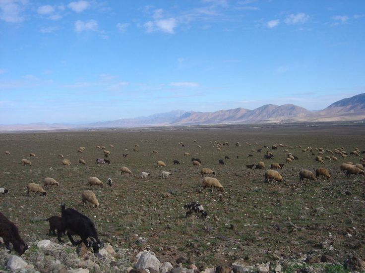 Morocco, Midelt region, foothills of High Atlas Mountains in distance