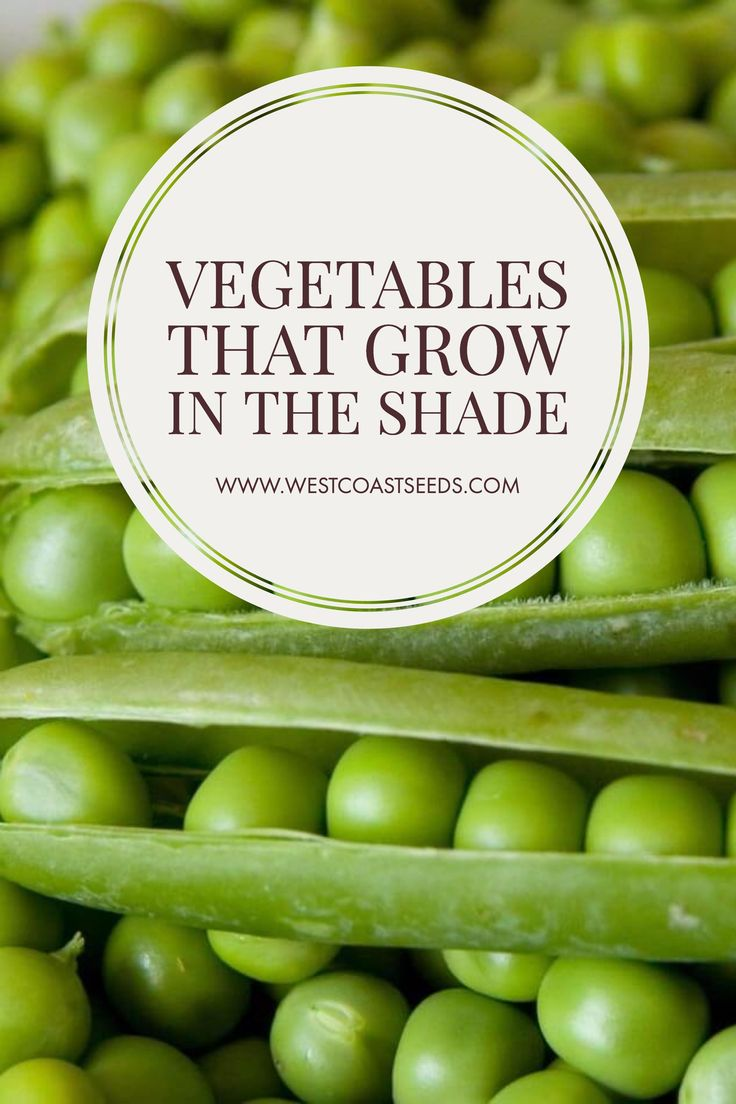 Growing Food In Part Shade