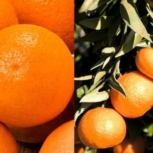 15Kg. Caixa Mixta de Taronges i Mandarines  15Kg Caja Mixta de Naranjas y Mandarinas  http://lestaronges.com/es/17-15kg-caja-mixta-de-naranjas-y-mandarinas.html