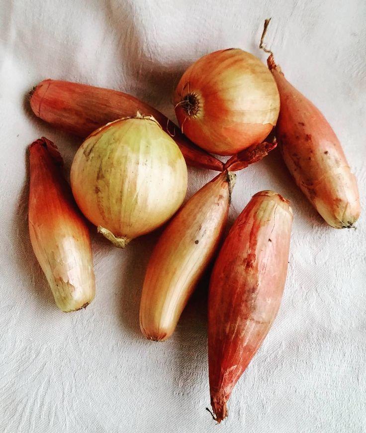 Sipulia. #itsetehty #instafood #food #foodgeek #foodgasm #foodie #foodblogger #foodporn #foodshare #instagood #foodlover #ruokablogi #ruoka#kotiruoka #herkkusuu #lautasella #Herkkusuunlautasella