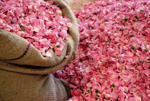 Rose de Mai - Fragonard PARFUMEUR #Fragonard #Flowers #Provence #Rose