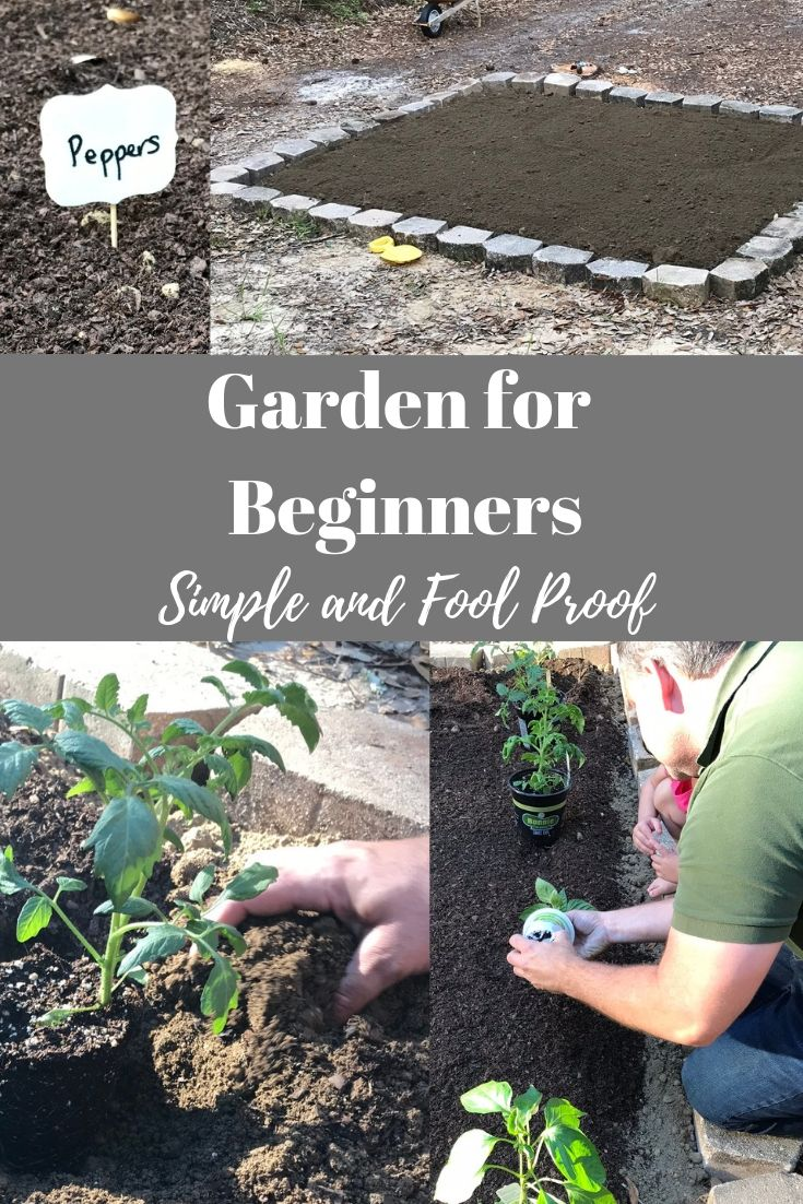 Garden For Beginners Simple Easy And Fool Proof Gardening For