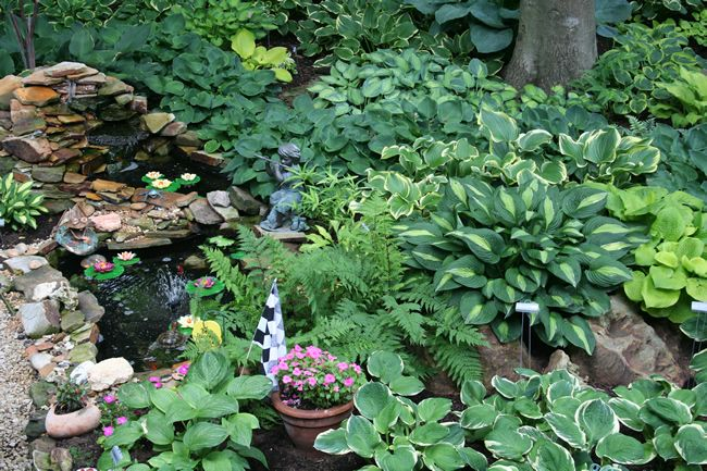 472 best gardening hosta fern love images on for Pond shade ideas