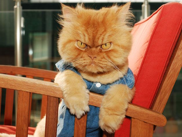 """O gatinho mais """"mal humorado"""" lindo do mundo..."""