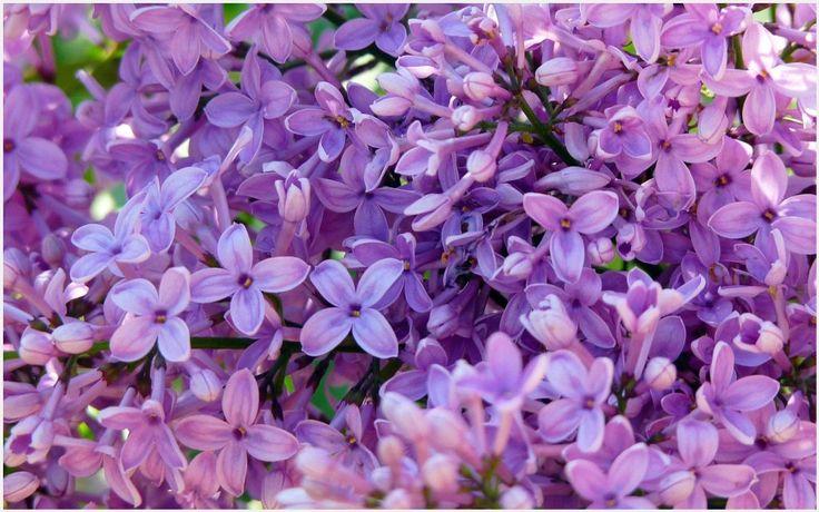 17 Best Ideas About Purple Wallpaper On Pinterest: 17 Best Ideas About Flowers Background Iphone On Pinterest