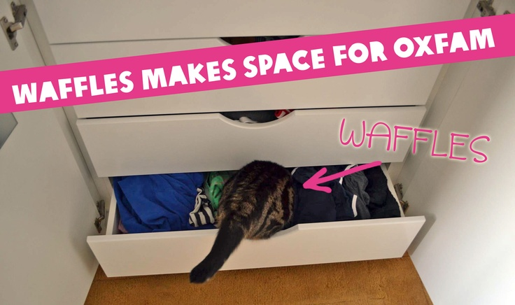 Our Oxfam shops urgently need stock, so we're asking workplaces in Dublin to pick a day where employees can bring in the clothes, books, accessories and home-wares they no longer need. Then we'll send our van over to collect the items on the day. We even purrsuaded Waffles the cat to get on board! Email breon.timmons@oxfamireland.org to organise your workplace's Make Space for Oxfam day. Please share this with your colleagues or anyone you think would like to get involved!
