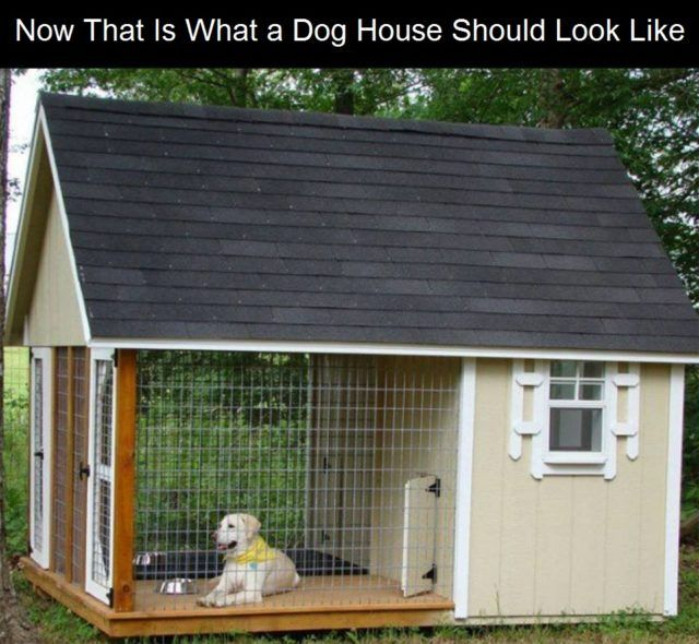 Now That Is What a Dog House Should Look Like