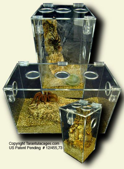 By far, these are the best Tarantula cages available! All acrylic design, secure lockable hasps, smooth polished edges and screen vents make them the perfect Tarantula habitat--not to mention the WOW factor!