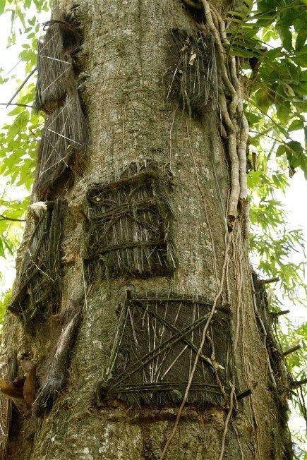 sexual innuendo tree Land