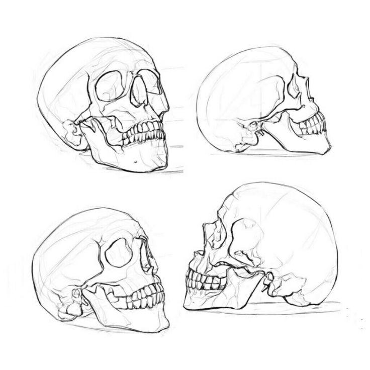 Drawn Skull Reference