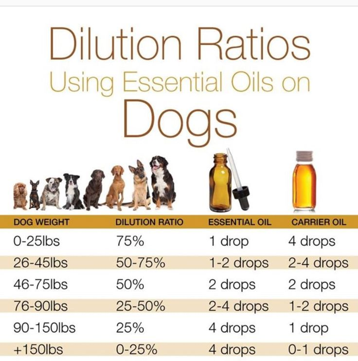 What Essential Oil Is Good For Dog Allergies Doterra