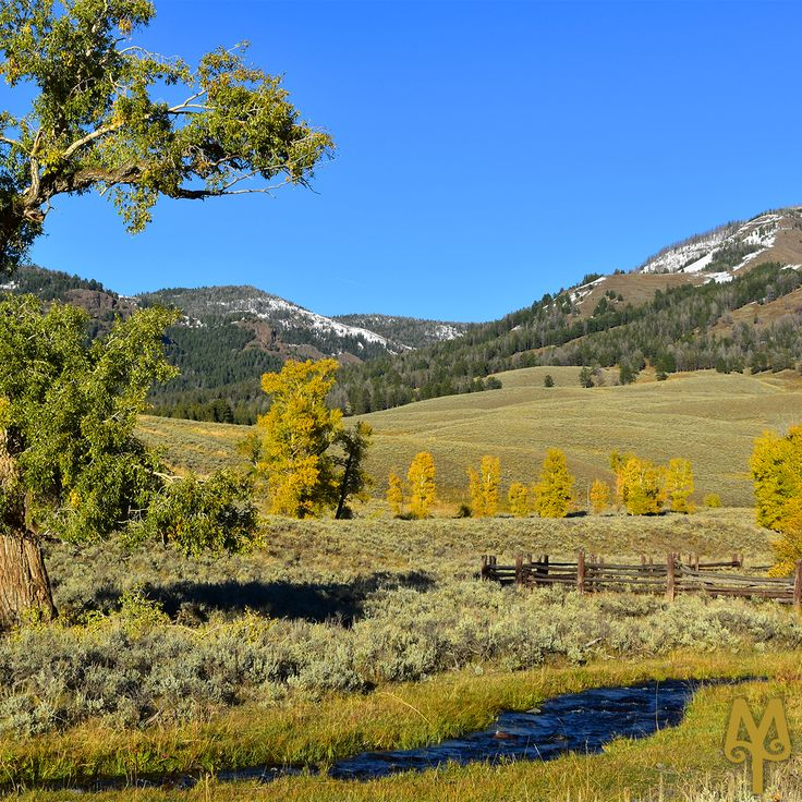 Fall season...When is the best time to see Yellowstone National Park? Read more in this Montana Treasures blog post. (photo: Fall 2017 in the Lamar River Valley, Yellowstone National Park)