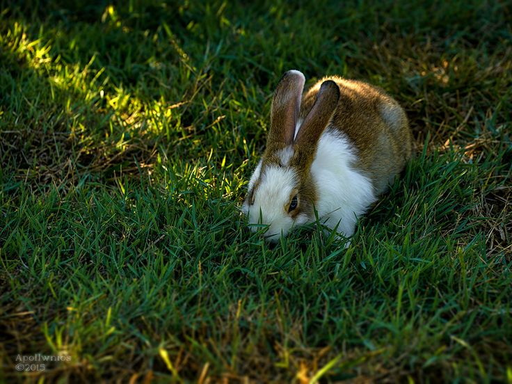 https://flic.kr/p/xDiuV1 | bunny | baby bunny orphaned