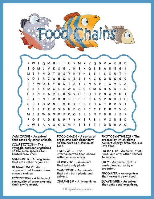 A word search puzzle featuring vocabulary words for teaching a unit on food chains and food webs. There are 15 words hidden in all directions including backwards and diagonally and there is some overlap in the words. This makes it a fairly challenging word search.