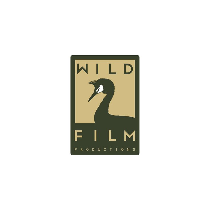 Identidade corporativa de produtora de filmes e documentários sobre vida selvagem. #adlcdesign
