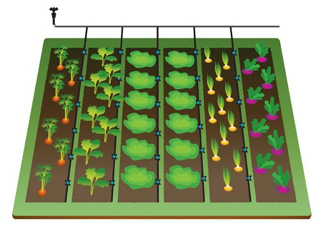 The 25 best Irrigation system design ideas on Pinterest Garden