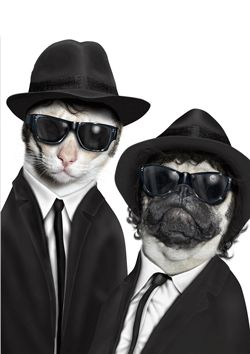 Famous Faces by Takkoda : Blues Brothers, S)