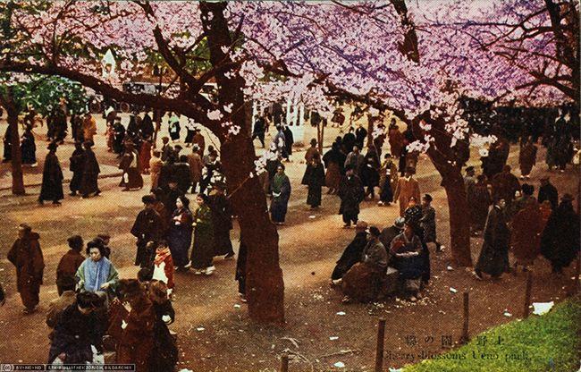 Tokyo, Ueno park, Cherry Blossom  (ETH-Bibliothek, Bildarchiv, Fel_043408-RE)