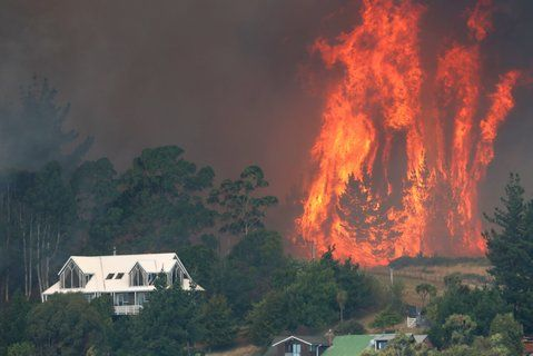 A terrifying wall of fire leaps out of a large pine plantation behind Westmorland along Worsleys Spur.