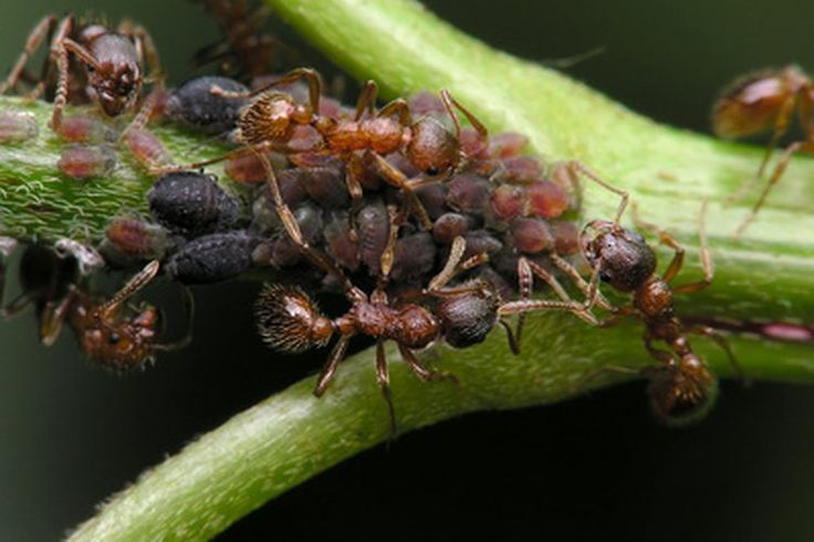 Erupción en la piel debida a una picadura de insecto   Muy Fitness