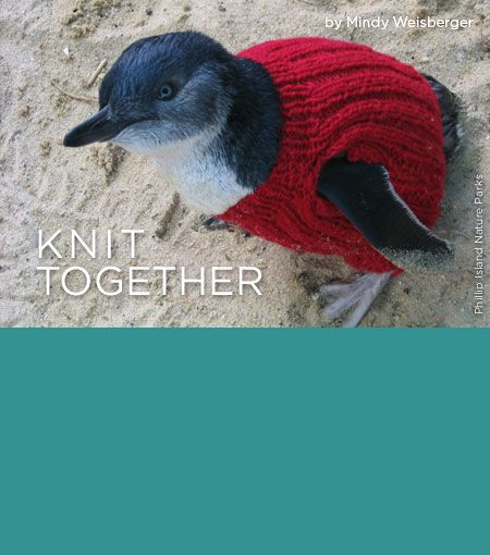 Knitting Lady Penguins : Best images about penguins in sweaters on pinterest