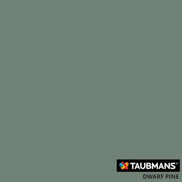 #Taubmanscolour #dwarfpine