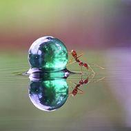 foto ini hanyalah foto serangga yang sedang berkaca di air..