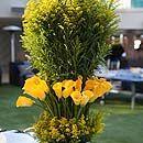 Wedding Flowers, Calla Lily, Colors, Cost, Bridal Bouquet, Centerpieces