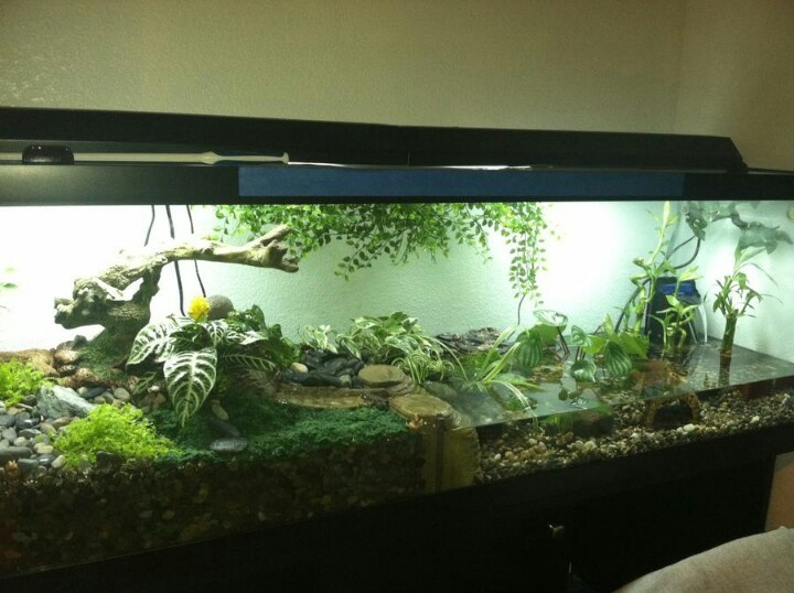 18 best images about fish tanks on pinterest saltwater for Fish tank fireplace