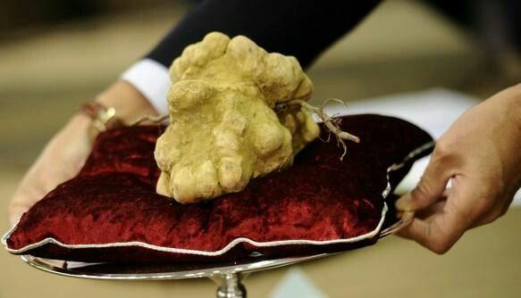Italian White Alba Truffle Worth 160,406.00 Dollars