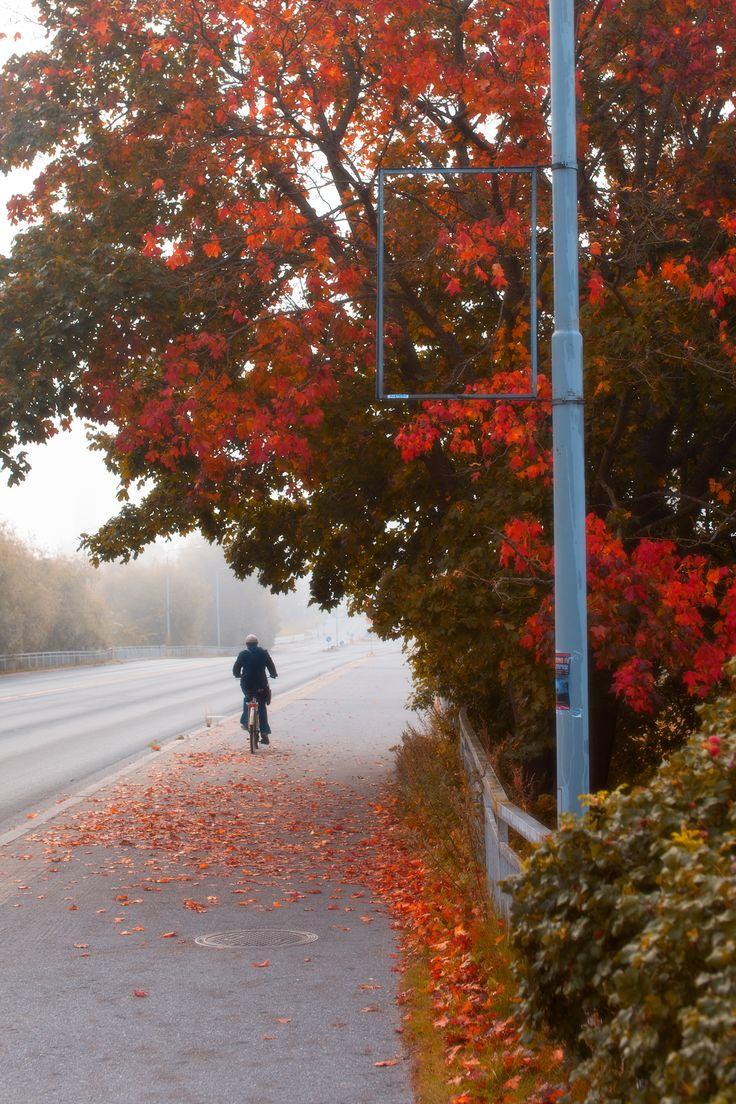 The Palosaari bridge in autumn. Photographer: Jouni Karjala