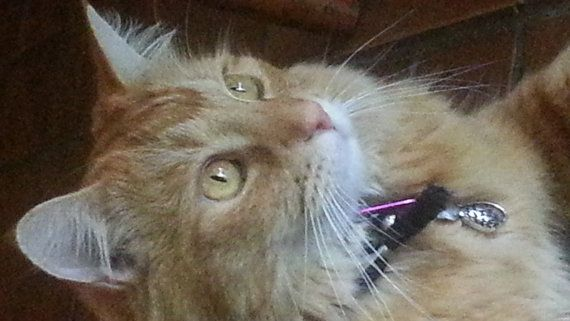 Peppermint Flea Bomb Cat Aromatherapy Tag by Aromawearables