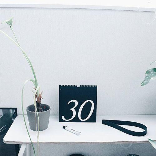 私の植物デビューはダイソーのクワズイモだったんですけど 何しても何もしなくても枯れない凄いヤツです . . ....