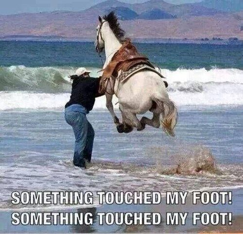This reminded me of myself..................I hate it when things touch my feet in water......