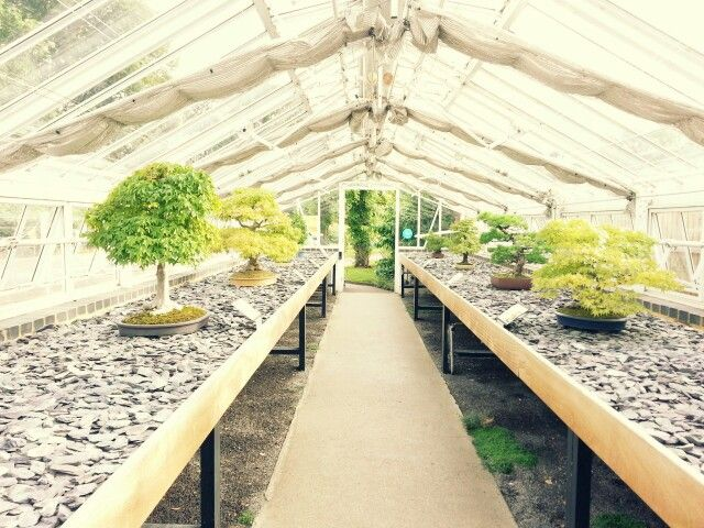 Bonsai greenhouse at kew gardens