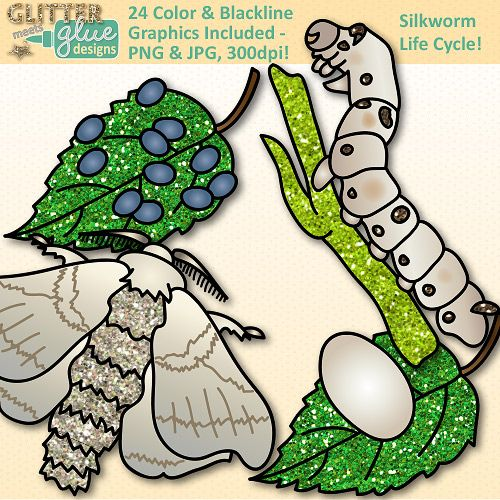 Silkworm Life Cycle Clipart - Glitter Biology Life Science Lesson Plan Ideas! #biology #science #lifescience #teacherspayteachers #education #clipart #graphics #illustration