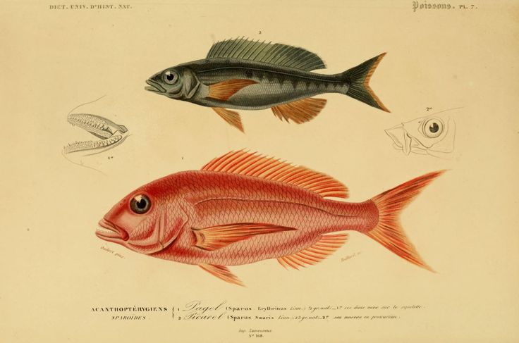 1000 images about poisson 2 on pinterest - Poisson dessin ...