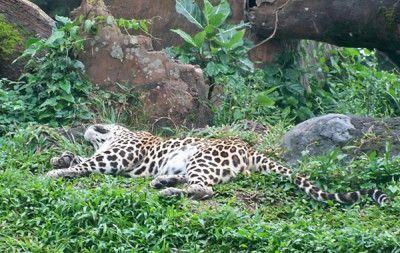 Kebun Binatang Indonesia Dinilai Tempat Pembunuhan Satwa   Mongabay.co.id