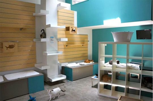 This is great! Green Shelter Design: Friends For Life in Houston Opens LEED Certified No Kill Animal Shelter