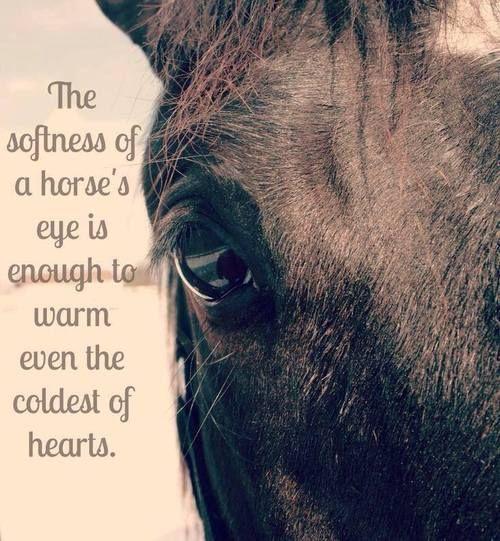 A suavidade do olho de um cavalo é suficiente para aquecer ainda mais frio dos corações.The softness of a horse's eye is enough to warm even the coldest of hearts.
